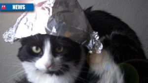 conspiracy-cat-header